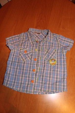 Koszula krótki rękaw rozmiar 74