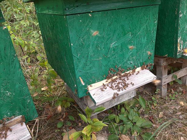 Sprzedam rodzinki odkłady pszczele na ramce wielkopolskiej lub dadant