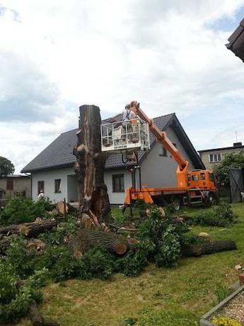 Wycinka drzew i pielęgnacja drzew / czyszczenie działek / ziemia
