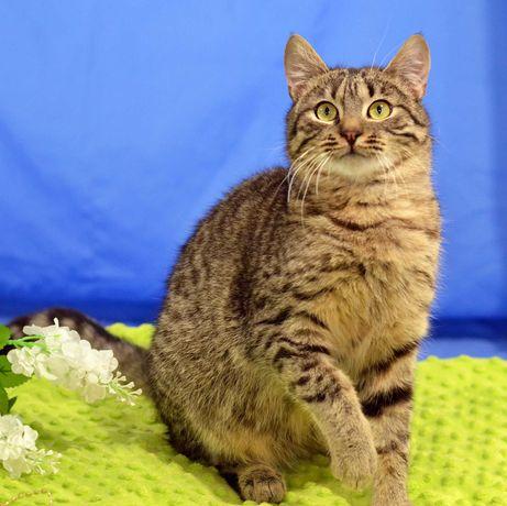 Ласковая и нежная кошка, красавица Плюша! (10 месяцев, стерилизована)