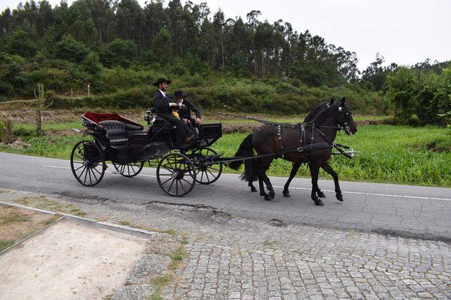 Cavalos engatados como montados