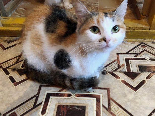 Молоденькая кошечка в поисках дома!