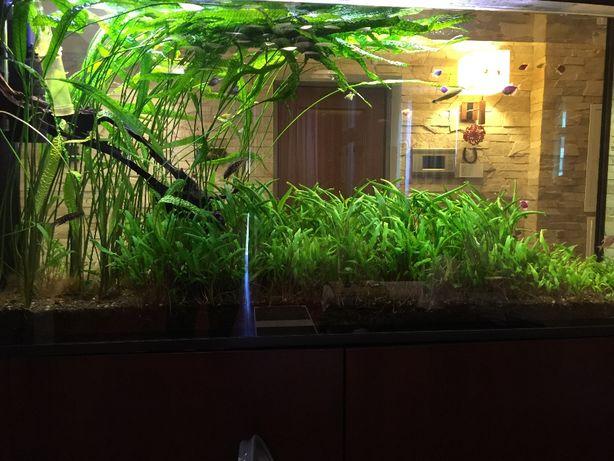 Обслуживание  аквариумов,чистка аквариумов,чистка пруда
