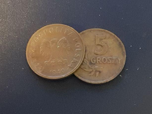 5 groszy rocznik 1949