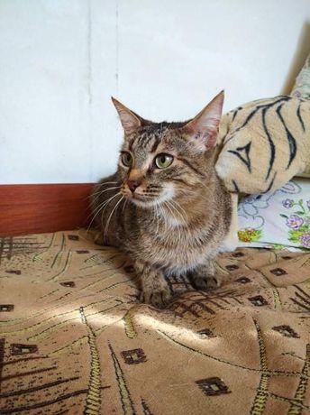 Кошка, стерилизованая, с паспортом