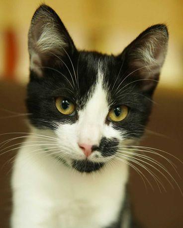Маленька кішка, 4міс.