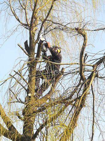 przycinanie wycinanie ścinanie drzew, alpinistycznie