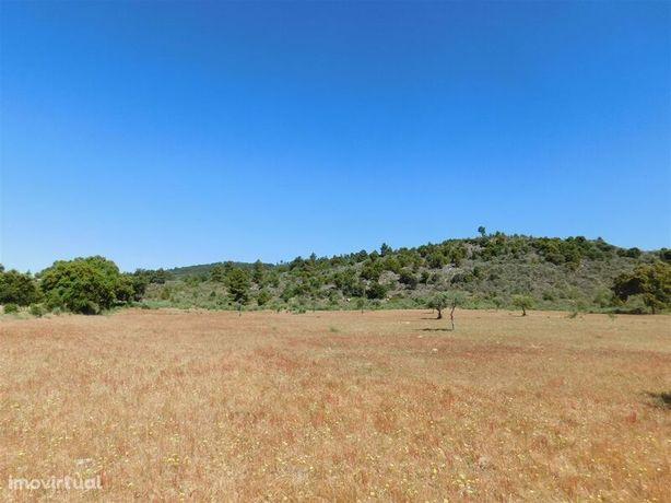 Terreno Agrícola Póvoa da Palhaça Fundão