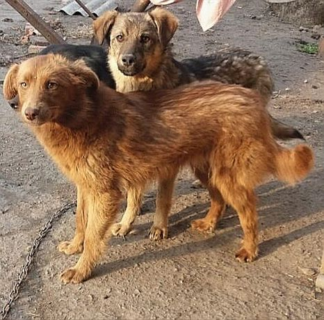 Молодые,стерилизованные собачки в добрые руки!