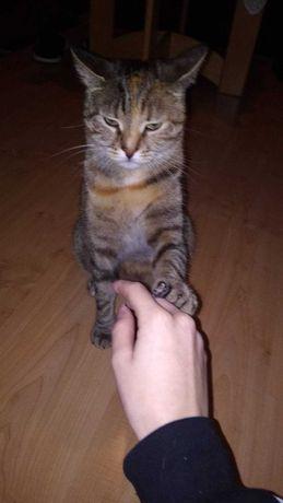 Zaginęła kotka Białystok