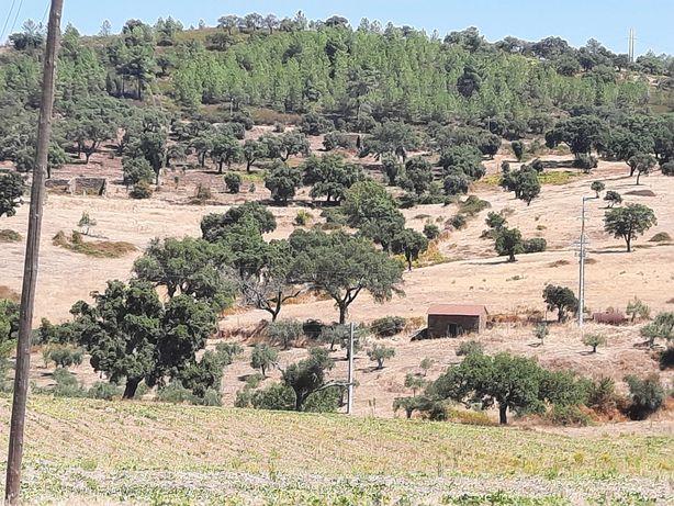 Terreno em Castelo Branco