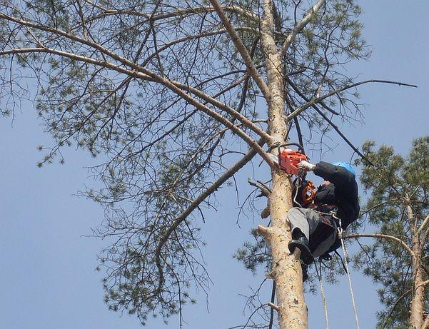 Спил деревьев альпинистами и с вышки, привезем дрова, возможен безнал