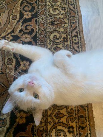 Котик кот в добрые руки