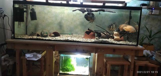 Аквариум для крупных рыб