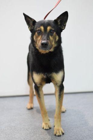 Zawiercie ul. Wojska Polskiego znaleziono psa! Szukamy właściciela!