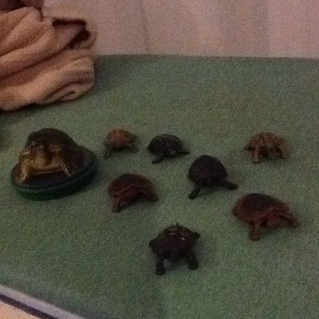 Colecção várias espécies/cores-tartarugas borracha/plástico