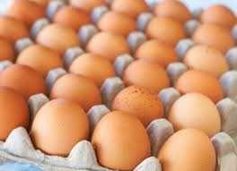 Инкубационное яйцо КООБ-500 молотка 45-52 грамма