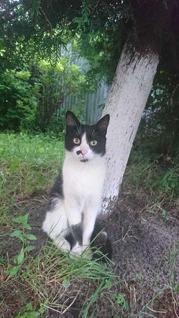 Котик шукає Свої Добрі Ручки!