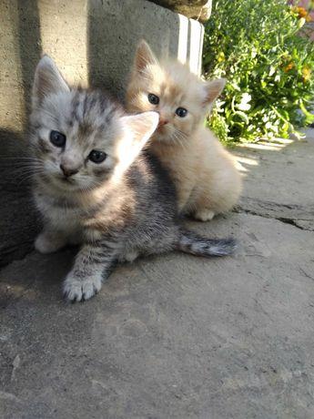 Кошенята красиві