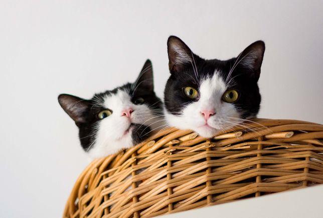 Rodzeństwo szuka domu! :)
