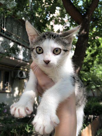 Котенок котята