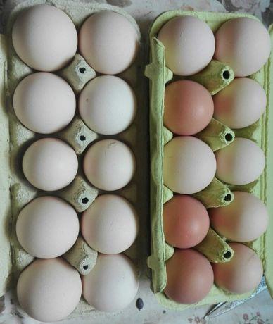 Jajka wiejskie ekologiczne od własnych kur