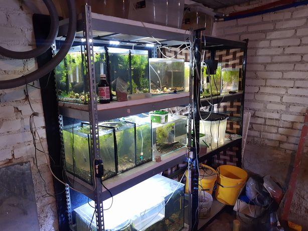 Regały z akwariami+ ryby