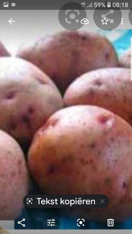 Картопля Повінь