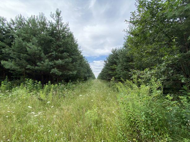 Інвестиційна пропозиція. 40 ділянок у лісі під будівництво