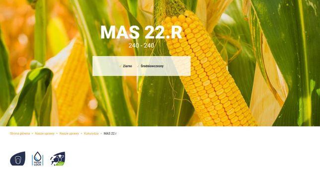 Kukurydza mas 22r
