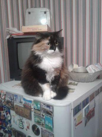 Пропала черно-белая кошка