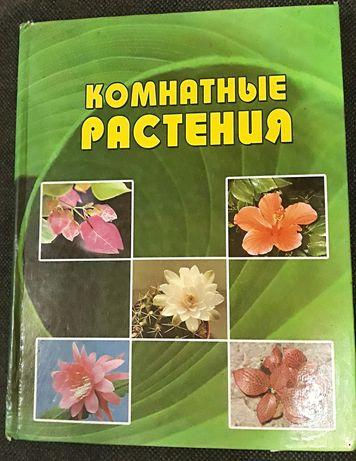 Комнатные цветы. Комнатные растения