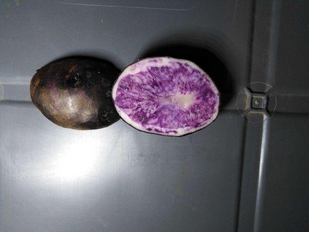 Ziemniaki fioletowe