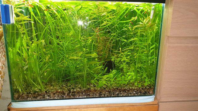 Sprzedaż roślin akwariowych