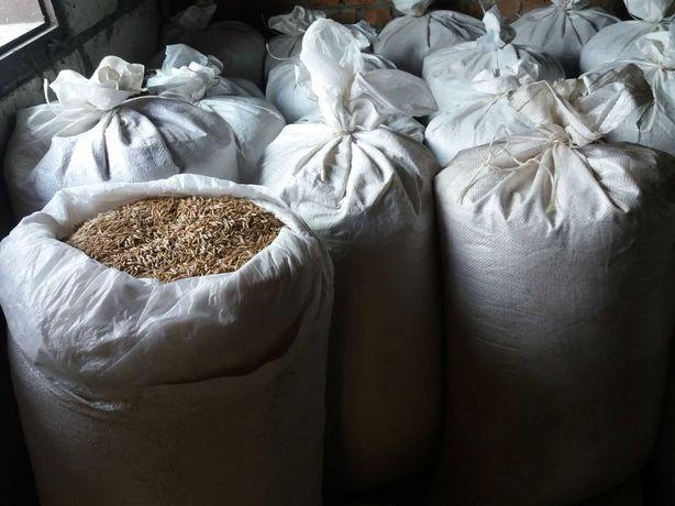 Продам Овес.Пшеницю Посівний Віяний 2020 року