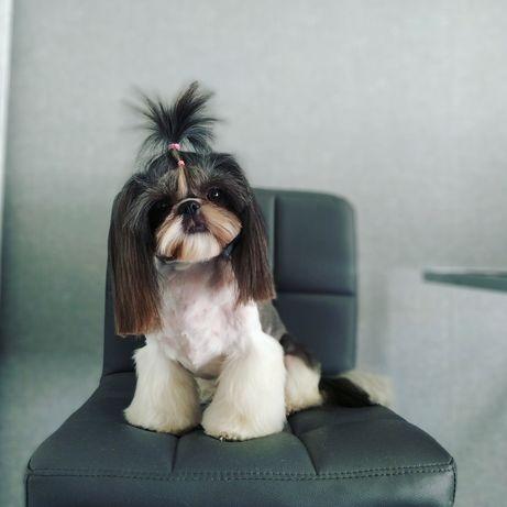 Feligroom. Стрижка собак Полтава, груминг Полтава, цена 250 грн.