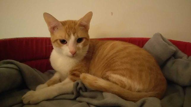 Gato amarelo para adoção