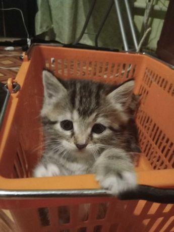 Отдам даром котят в хорошие руки.