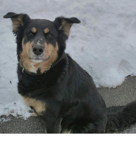 Пропала собака девочка