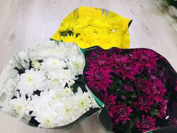 Хризантема в горшочке.Цветы на 8 марта.
