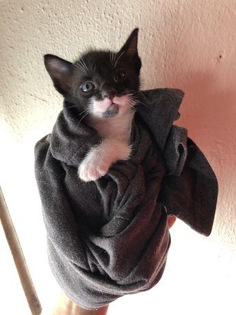 Doa-se gatinhos de 2 meses