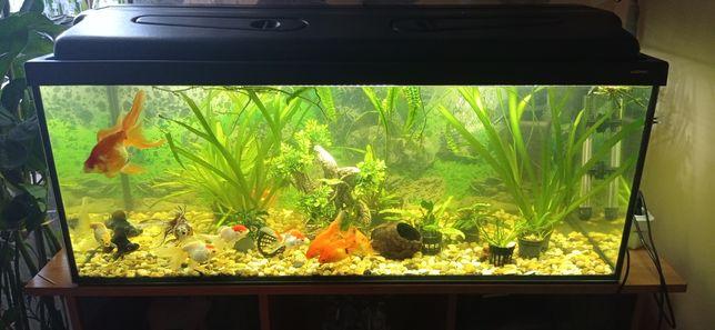 Akwarium  dl. 100 cm x szer 40 cm x wys. 40cm