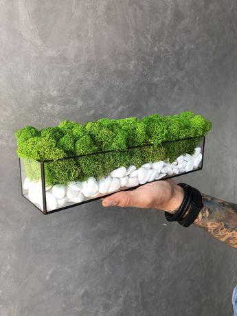 Моссаріум із стабілізованим мохом
