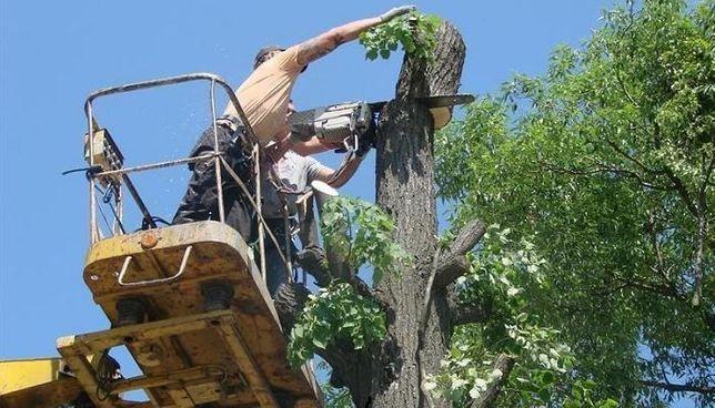 Спил и Обрезка деревьев (любой сложности)