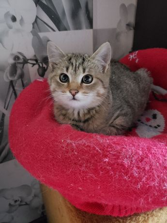 Кошечка Руся,4 месяца,ОЧЕНЬ ласковая,спокойная,обработана от паразитов