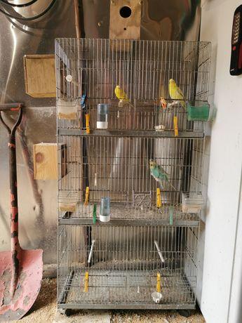 Viveiro 3 andares para aves de pequeno porte