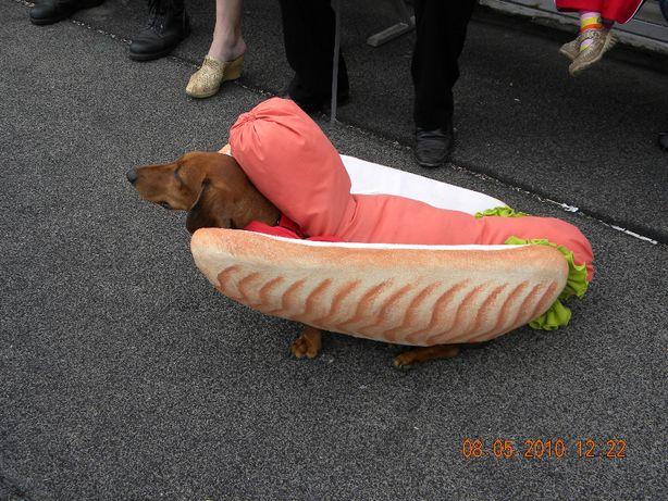 Карнавальный костюм для таксы