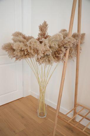 Сухой тростник, Пампасная трава, Сухоцвет, Кортадерия Лагурус