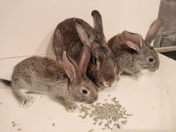 Продам молодых кроликов