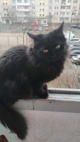 Пропала чёрная кошка